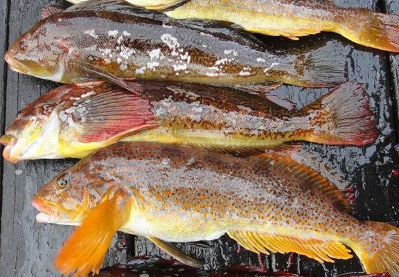 Fishing-08